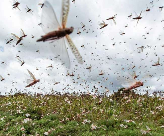 'Help will be extended to all those affected by locust attack': PM Modi on Mann Ki Baat