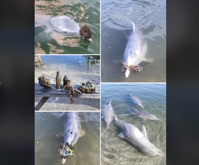 Dolphins, missing human interaction, bribe everyone with exclusive gifts from the sea bed