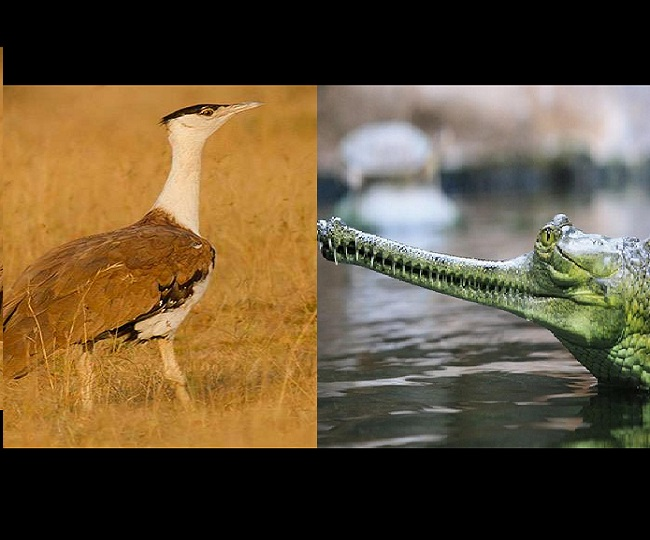National Endangered Species Day 2020: Five rare and exotic species that are endangered in India
