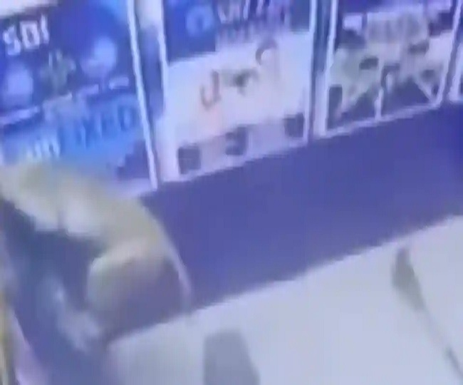 Monkey trying to rob an ATM in Delhi will leave you astonished, netizens call it 'Monkey heist' | Watch