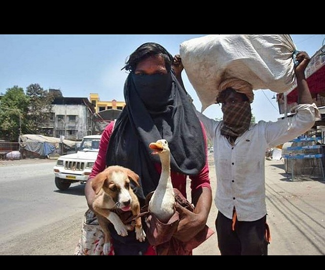 Carrying dog in one hand and duck in other, migrant workers win internet as they walk miles to reach home