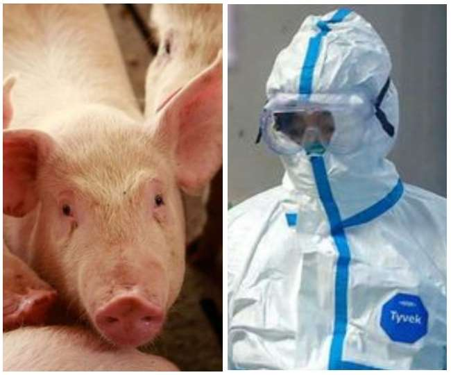 African Swine Fever kills 2,800 pigs in Assam, state claims virus came from China