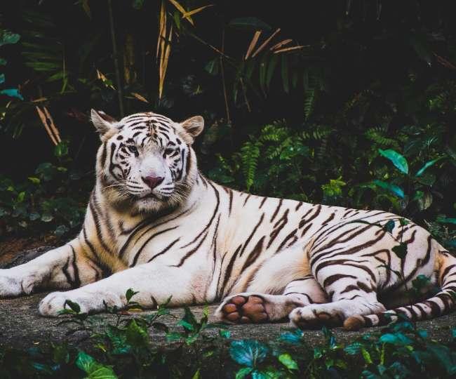 दिल्ली का चिड़ियाघर है एशिया के सबसे अच्छे Zoo में शामिल, फैमिली संग यहां आकर करें मस्ती
