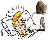 प्लेटलेट कम होने पर हर बार डेंगू समझने की न करें भूल, चूहे चढ़ा रहे बुखार lucknow news
