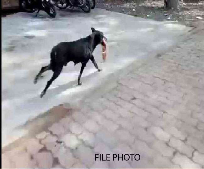 अस्पताल की लापरवाही- अॉपरेशन थियेटर से मरीज का कटा पैर लेकर भागा कुत्ता