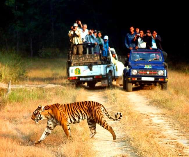 जिम कॉर्बेट नेशनल पार्क में महंगी हुई जंगल सफारी