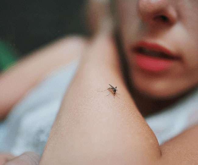Image result for डेंगू