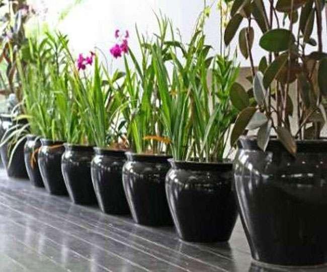 बेहद खास है ये 12 पौधे जो रखेंगे आपकी सेहत का ख्याल