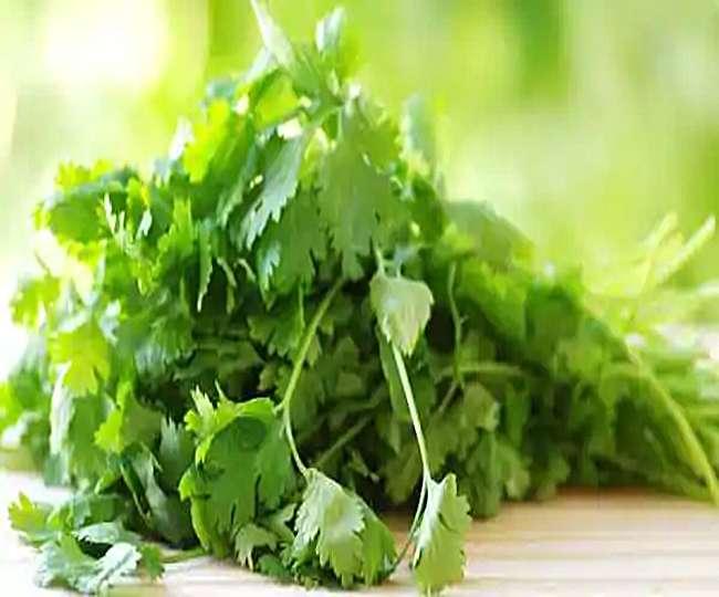 इसके बिना हर भारतीय खाना है अधूरा, ये हरी पत्ती आपको कई बीमारियों से रखती है दूर