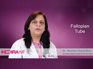 टी.बी. से ग्रसित महिलाओं को आईवीएफ से मिलेगा संतान सुख