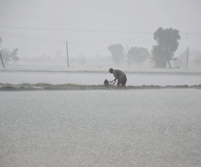 Haryana rain