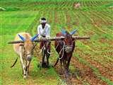 केंद्रीय मंत्रिमंडल ने खरीफ की 14 फसलों पर न्यूनतम समर्थन मूल्य बढ़ाया, 83 फीसद तक बढ़ी MSP