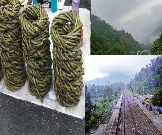 सिलीगुड़ी का गुलमा स्टेशन, सेवक का प्राकृतिक नजारा तथा बाजार में बिक रहे गिलोय