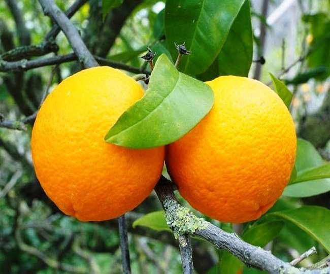 Odd News:  4 चीनी नागरिकों ने 30 मिनट में 30 KG संतरे खा लिए, जाने पूरा मामला