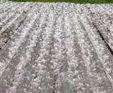 Himachal Weather Update: अचानक बदला मौसम, कुल्लू में ओलावृष्टि से फसलों को नुकसान