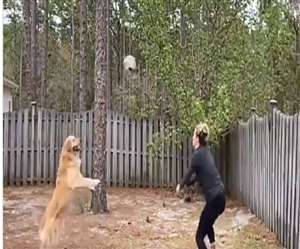 newimg/02062020/02_06_2020-watch_viral_video_of_dog_playing_volleyball_20340863_s.jpg
