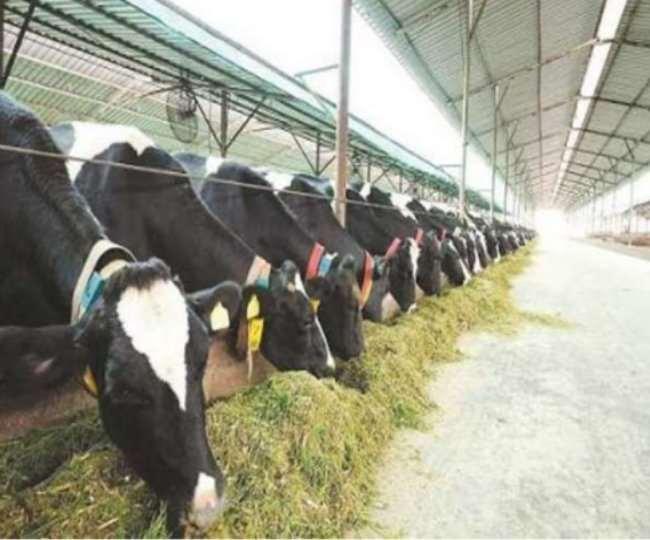 जम्मू कश्मीर में दूध का उत्पादन बढ़कर 2018-19 में 2460 हजार मीट्रिक टन तक पहुंच गया है।