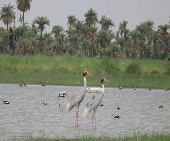 Van Mahotsav 2020: प्रकृति की गोद में तैयार हुआ मेहमानों का नया ठिकाना, आगरा आएं तो यहां जाना न भूलें