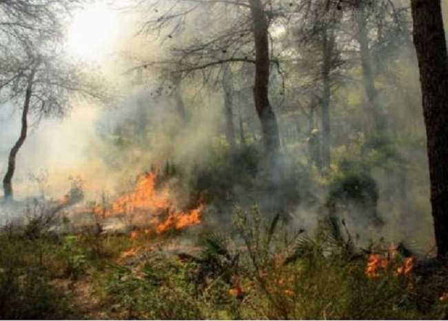 Simlipal sanctuary has been burning for 10 days Center Jungle Minister Prakash Javadekar gave orders to control the fire