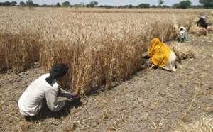 किसानों की बल्ले-बल्ले, घर पर मजदूरों की दस्तक