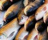 लॉकडाउन में तलिए रेहू-कतला, धनबाद के बाजारों में 120 से 170 रुपये किलो बिक रही आंध्र प्रदेश से आई मछली