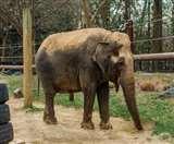केरल में पहले भी हो चुकी है हाथियों की पटाखे से मौत, मेनका ने राहुल पर निशाना साधा