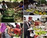 Mango Season: 'आम' मंडी में आ गया खास दशहरी, मलिहाबाद के बागों में पक रहा है स्वाद