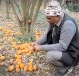 आत्मनिर्भर भारत : किसानों ने मौसमी की खेती में बढ़ाए कदम, आप भी जानें...