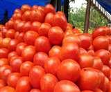 Tomato Price Hiked : गर्मी में लाल हुआ टमाटर, रिटेल में 50 रुपये प्रति किलो पहुंचे दाम
