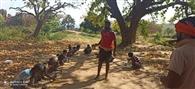 भाजपा कार्यकर्ताओं ने कराया गरीबों को भोजन