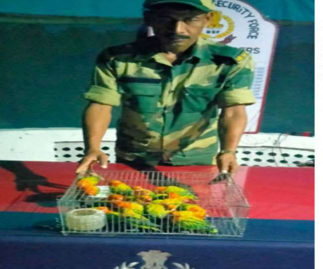 भारत-बांग्लादेश सीमा के पास बीएसएफ द्वारा जब्त पक्षी।