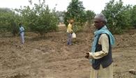 जरूरतमंदों को रोजगार, बढ़ाया हरियाली का संसार
