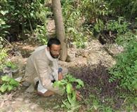 पर्यावरण दिवस.. मंडलसेरा के किशन ने बसाया जंगल, जी उठे जलस्रोत