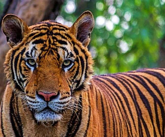 YouTuber Pranks: नकली बाघ को देख अन्य जानवरों ने दिया ऐसा Reaction, देखें वीडियो
