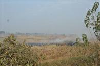 पराली जलाने वाले नौ और किसानों के खिलाफ रिपोर्ट