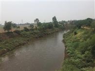 बाढ़ का खतरा भाप घग्घर के किनारों को मजबूत करने में जुटे किसान