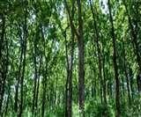 पांच सालों में देश में विकसित किए जाएंगे 200 नगर वन, शहरी वन योजना के तहत होगा इनका विकास
