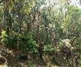 Environment Day 2020 : ढूँढ़ते रह जाओगे, कल 'प्राणवायु' भी नहीं मिलेगी Prayagraj News