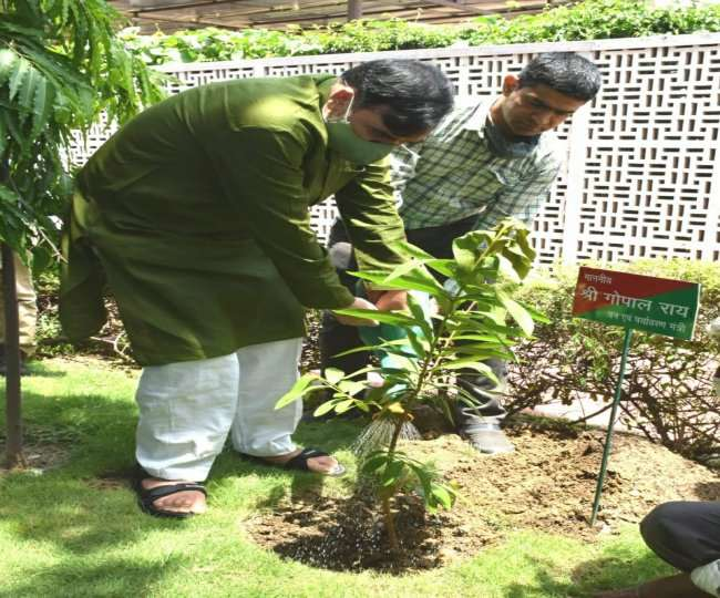 दिल्ली सरकार की 14 नर्सरी से कोई भी व्यक्ति जाकर मुफ्त में औषधीय पौधे प्राप्त कर सकता है