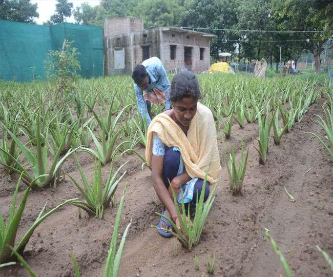 झारखंड के देवरी गांव के किसान हकीकत में बदल रहे हैं।