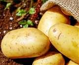Benefits Of Potatoes For Skin: त्वचा को सुंदर और चेहरे पर निखार लाता है आलू!