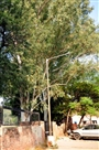 प्रशासन और निगम के बीच लटका स्कूलों से पेड़ हटाने का मामला