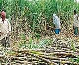 'रेवन्यू शेयरिंग फार्मूला' लागू होने से गन्ना किसानों को मिलता अतिरिक्त 9000 करोड़