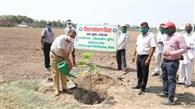 एचएयू में पर्यावरण दिवस पर कुलसचिव ने किया पौधारोपण