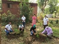 लोकहित मंच ने शेखुपरा के प्राइमरी स्कूल में लगाए 121 पौधे
