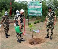 बीएसएफ महानिदेशक ने पर्यावरण दिवस पर किया पौधारोपण