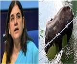गर्भवती हथिनी की मौत के मामले में मेनका गांधी के खिलाफ दर्ज किया गया मामला