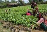 अब परिषदीय स्कूलों में लगेंगे नीबू व सहजन के पौधे,वन विभाग करेगा मदद Moradabad News