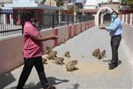 पशु-पक्षियों को भोजन कराने दौड़ी पालिका