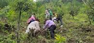 श्याम स्मृति वन में रोपे औषधीय पौधे